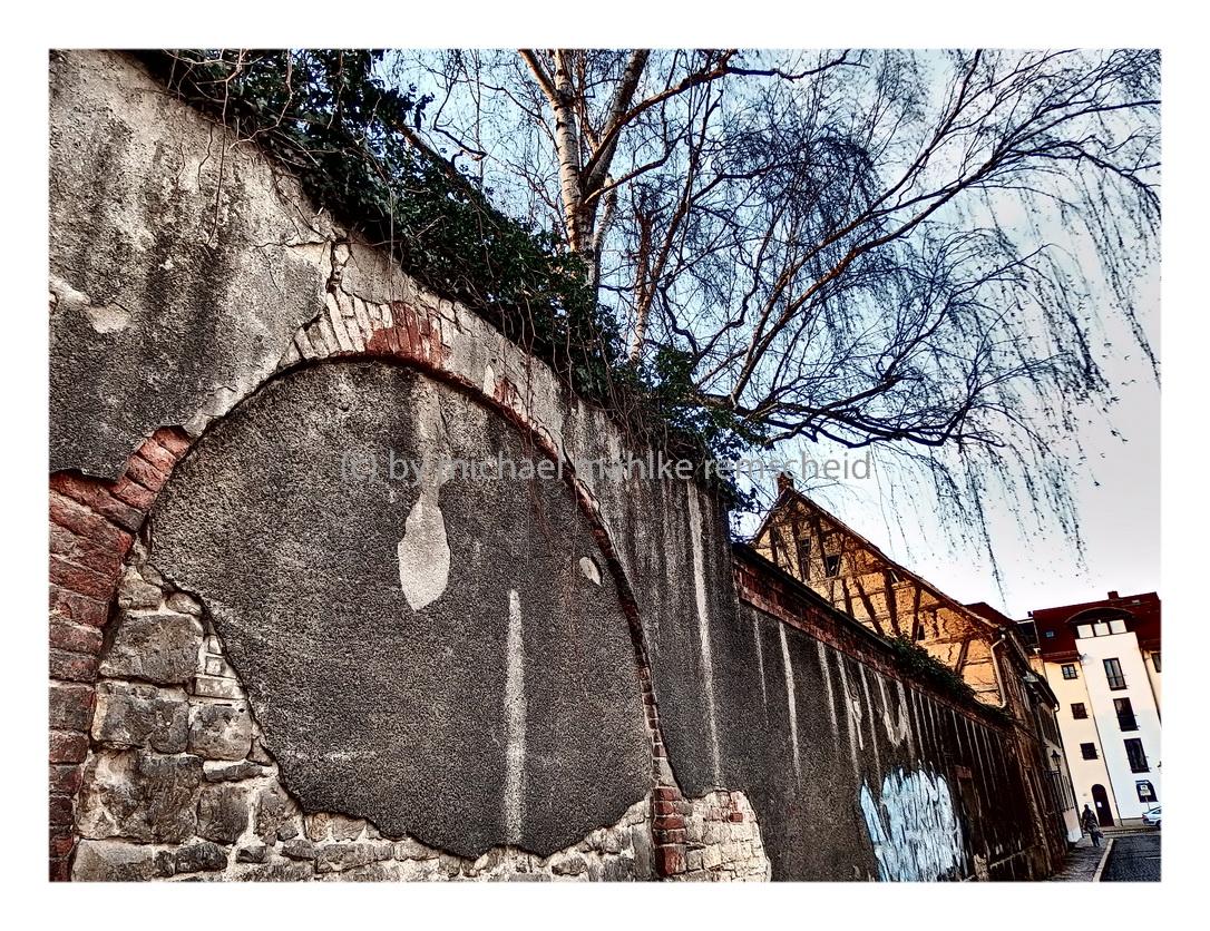 Der Blick über den Zaun beim Spaziergang in Naumburg an der Saale