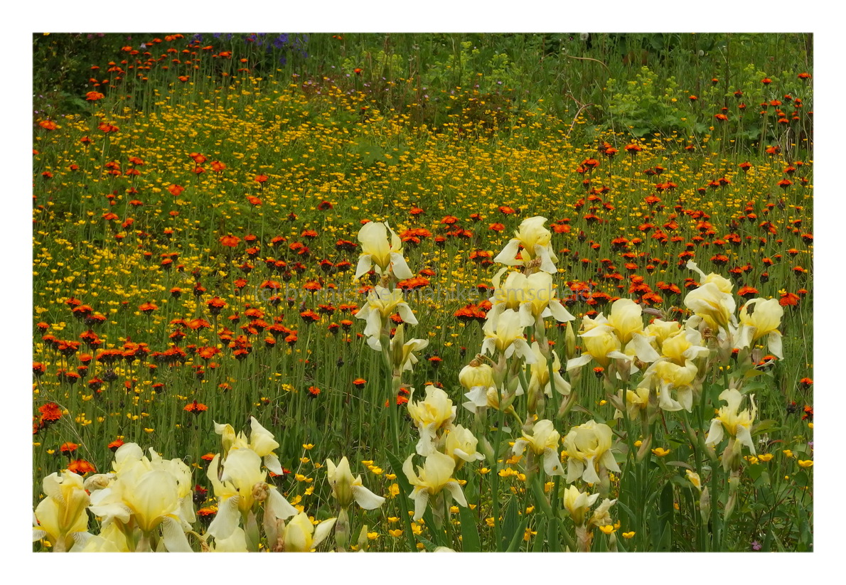 Fotografische Herausforderungen im Garten