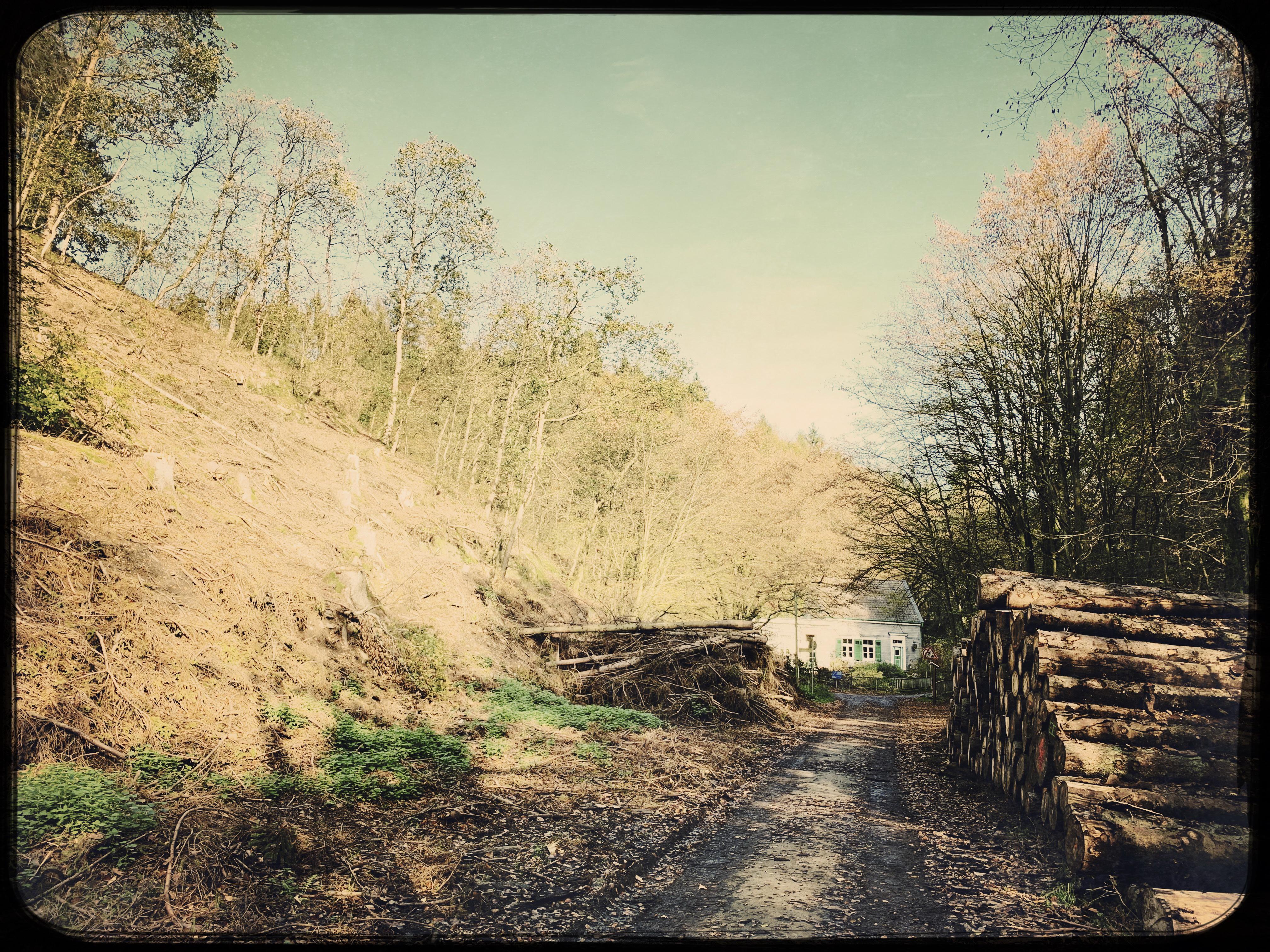Der Wald als Heimat